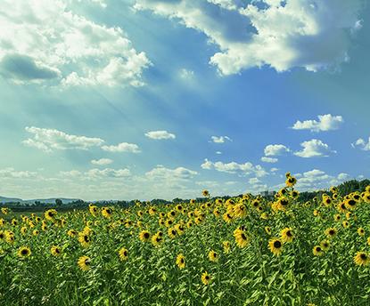 真夏を快適に過ごす養生法 3つのポイント~ビューティ・ぺルヴィス®と東洋医学の智慧から~