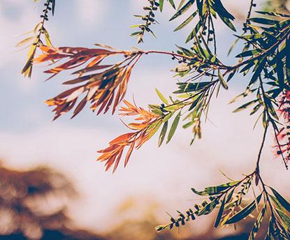 秋から冬にかけての養生法 3つのポイント~ビューティ・ぺルヴィス®と東洋医学の智慧から~