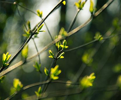 春は「目覚める」季節。熱のコントロールとデトックスで、身体を整えよう