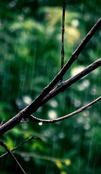 季節のおすすめアーユルヴェーダレシピ~梅雨を快適に過ごすヒント~